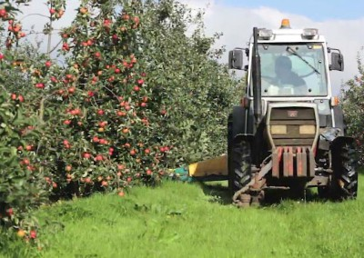 Celtic Marches Apple Harvest